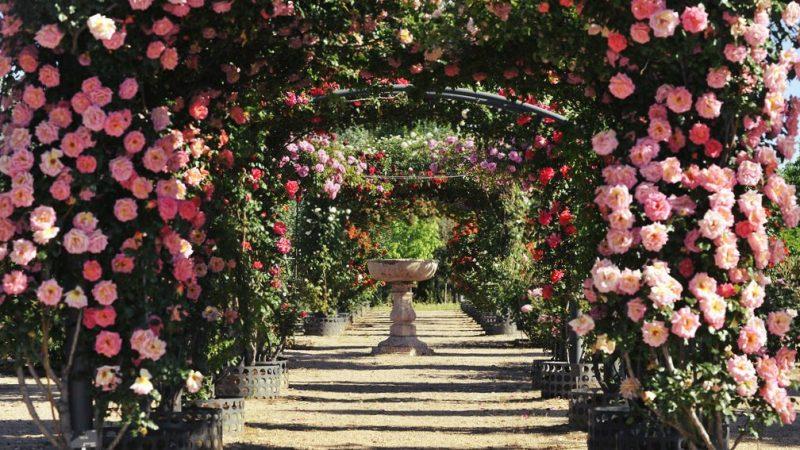 jardin de la rosaleda