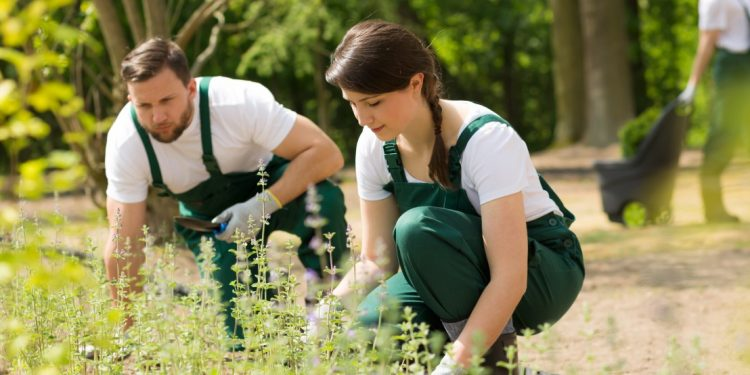 como ser voluntario en greenpeace