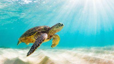 voluntariado con tortugas