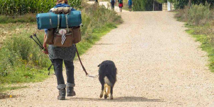 camino santiago perro